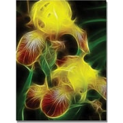 Trademark Global Kathie McCurdy Yellow Iris Canvas Art, 47 x 35