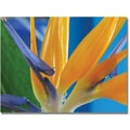 Trademark Global Kathie McCurdy in.Bird of Paradisein. Canvas Art, 35in. x 47in.