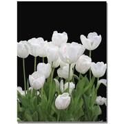 Trademark Global Kathie McCurdy White Tulips Canvas Art, Medium, 47 x 35