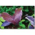 Trademark Global Kathie McCurdy in.Hawaiian Garden IIin. Canvas Art, 16in. x 24in.