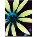 Trademark Global Kathie McCurdy in.Lime Green Coneflowerin. Canvas Arts