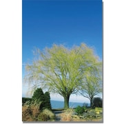 """Trademark Global Kathie McCurdy """"Wind to the Willow"""" Canvas Art, 24"""" x 16"""""""