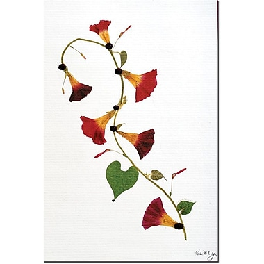 Trademark Global Kathie McCurdy in.Enchanted Garden Morning Gloriesin. Canvas Art, 24in. x 16in.