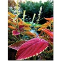 Trademark Global Kathie McCurdy in.Magical Garden IIin. Canvas Art, 32in. x 24in.