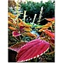 Trademark Global Kathie McCurdy Magical Garden II Canvas