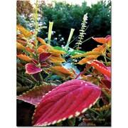 "Trademark Global Kathie McCurdy ""Magical Garden II"" Canvas Art, 32"" x 24"""