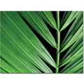 Trademark Global Kathie McCurdy in.Palm at Nightin. Canvas Art, 24in. x 32in.