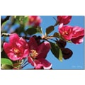 Trademark Global Kathie McCurdy in.Apple Blossomsin. Canvas Arts