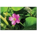 Trademark Global Kathie McCurdy in.Cranesbill IIin. Canvas Art, 30in. x 47in.