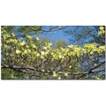 Trademark Global Kathie McCurdy in.Dogwood Branchesin. Canvas Art, 24in. x 47in.