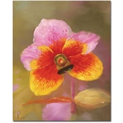 Trademark Global Orange-Pink Orchid Canvas Art, 32 x 24