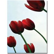 Trademark Global Michelle Calkins Red Tulips from the Bottom Up Canvas Art, 47 x 30