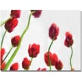 Trademark Global Michelle Calkins in.Red Tulips from Bottom Up IVin. Canvas Art, 18in. x 24in.