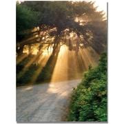 "Trademark Global Michelle Calkins ""Sunlight Through Trees"" Canvas Art, 47"" x 35"""