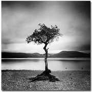 "Trademark Global Nina Papiorek ""Scotland, Millarochy Tree"" Canvas Arts"