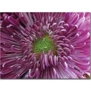 "Trademark Global Patty Tuggle ""Pink Flower"" Canvas Art, 14"" x 19"""