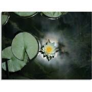 """Trademark Global Patty Tuggle """"Backyard Beauty"""" Canvas Art, 18"""" x 24"""""""