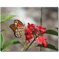 Trademark Global Patty Tuggle in.Butterfly on Red Flowersin. Canvas Art, 24in. x 32in.