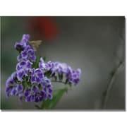 "Trademark Global Patty Tuggle ""Purple Flowers & Moth"" Canvas Art, 35"" x 47"""