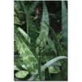 Trademark Global Patty Tuggle in.Aloe Beautyin. Canvas Art, 24in. x 16in.