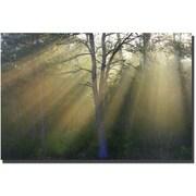 "Trademark Global Patty Tuggle ""New Day"" Canvas Art, 16"" x 24"""