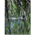 Trademark Global Patty Tuggle in.Gator Camouflagein. Canvas Art, 24in. x 18in.