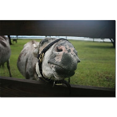 Trademark Global Patty Tuggle in.GIve Me a Kiss Donkeyin. Canvas Art, 16in. x 24in.