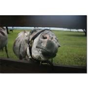 "Trademark Global Patty Tuggle ""GIve Me a Kiss Donkey"" Canvas Art, 16"" x 24"""