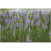 "Trademark Global Patty Tuggle ""Purple Lake Flowers"" Canvas Art, 16"" x 24"""