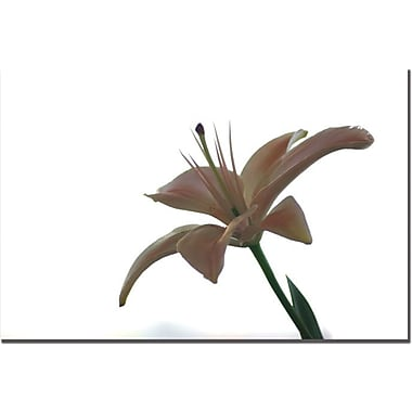 Trademark Global Tammy Davison in.Lily on Whitein. Canvas Art, 16in. x 24in.