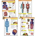 Mark Twain Human Body and Health Tips Bulletin Board Set