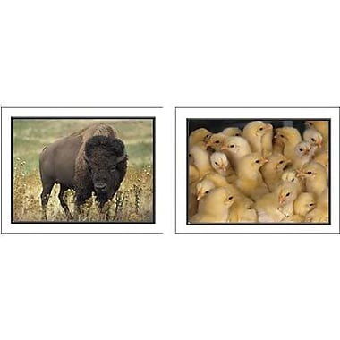 Key Education Publishing® Favorite Animals Photographic Learning Cards, Grades Pre Kindergarten-1st