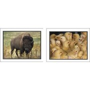 Key Education Publishing® Favorite Animals Photographic Learning Cards, Grades pre-kindergarten-1st