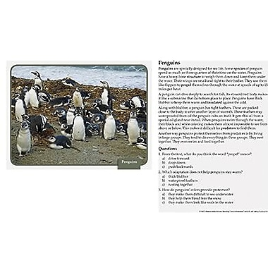 Edupress® ™ Reading Comprehension Science Card, Animal Adaptations