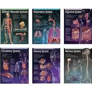 Creative Teaching Press™ Human Body Chart