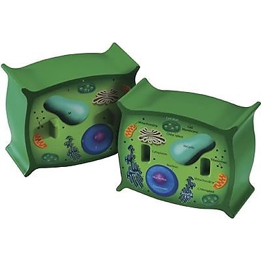Learning Resources® Cross-Section Plant Cell Model
