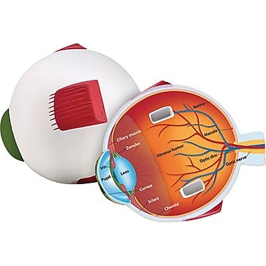 Learning Resources® Soft Foam Cross Section Eye Model