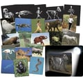 Roylco® What's Inside Animals X-Ray