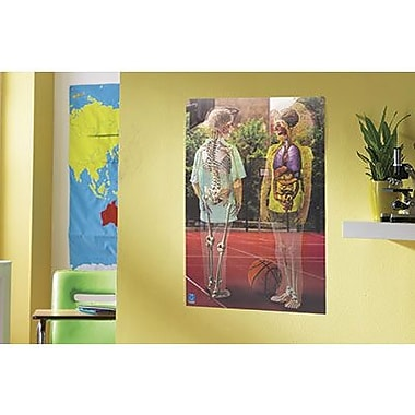 Educational Insights® Inside Out Lenticular Human Body Poster