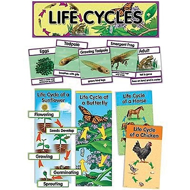 Creative Teaching Press Mini Bulletin Board Set, Life Cycles