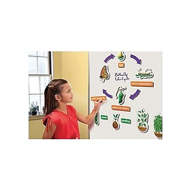 Educational Insights® 3-D Life Cycles Demonstration Magnets, Set of 20