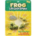 Insect Lore® Frog Life Cycle Stages Figures