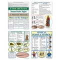 McDonald Publishing® Bulletin Board Pack, Music Terms and Symbols