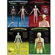 McDonald Publishing® Poster Set, The Human Body