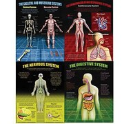 McDonald Publishing® Poster Set, The Human Body