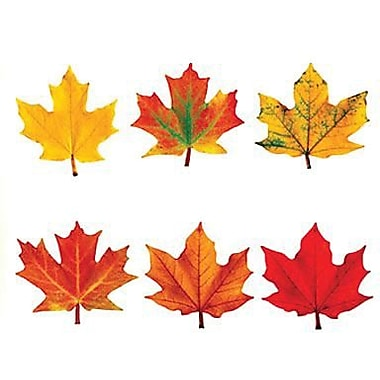 Trend Enterprises® Pre-kindergarten - 9th Grades Classic Accents, Maple Leaves