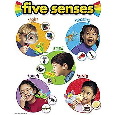 Trend Enterprises® Five Senses Learning Chart