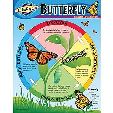 Trend Enterprises® Life Cycle of A Butterfly Learning Chart