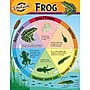 Trend Enterprises® Life Cycle of A Frog Learning