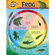 Trend Enterprises® Life Cycle of A Frog Learning Chart
